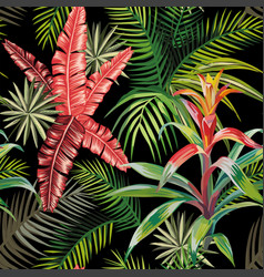 pink palm leaves bromelia black background vector image