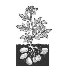 Potato plant sketch vector
