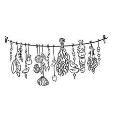 witch herbs boho hanging doodle decoration vector image