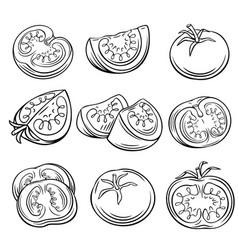 hand drawn tomato set vector image