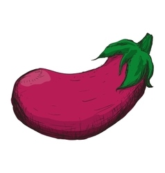 Eggplant sketch vegetable healthy food icon vector