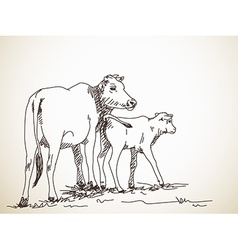 cow and calf vector image