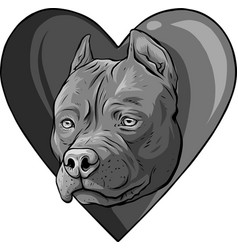 Design pitbull head dog in heart vector