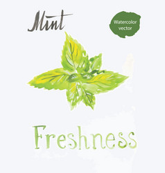 mint leaves watercolor vector image vector image