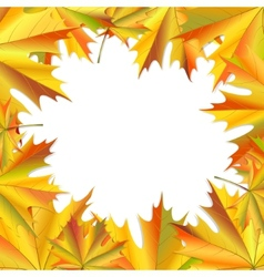 frame maple leaves vector image