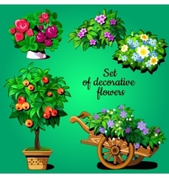 Home set of decorative flowering plants vector image