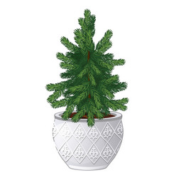 office fir tree growing in ceramic pot in vintage vector image