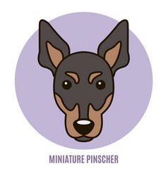 Portrait miniature pinscher vector