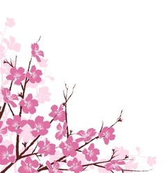 Branches with Pink Flowers Isolated on White vector image