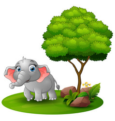 Cartoon elephant under a tree on a white backgroun vector