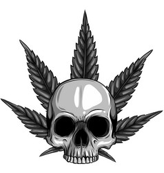 design skull with leaves marijuana head vector image