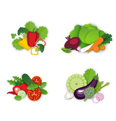 fresh organic vegetables composition set vector image