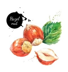 Hand drawn watercolor painting nut on white vector