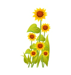 icon sunflower vector image