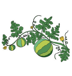 juicy ripe watermelon in foliage and flowers is vector image vector image