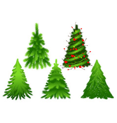 set green christmas fir pine tree vector image