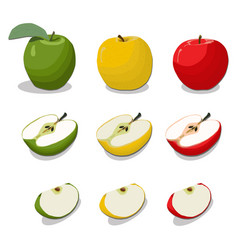 whole ripe fruit colors apple vector image