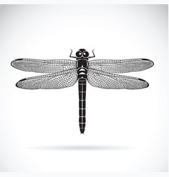 dragonfly on white background insect animal vector image vector image