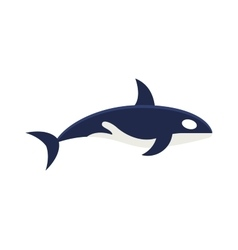 Killer whale Orcinus orca isolated on white vector image