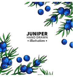 juniper drawing frame isolated template vector image