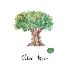 an old bountiful olive tree extracted vector image