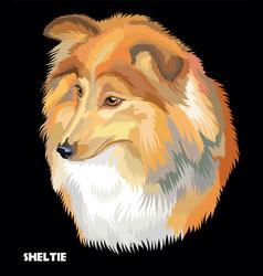 sheltie colorful portrait vector image vector image