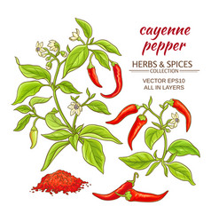 cayenne pepper set vector image