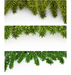 Christmas banners with spruce branches vector