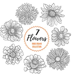Hand drawn flowers collection vector