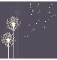 dandelion flight purple vector image
