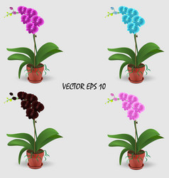 four realistic multicolored orchids in pots vector image
