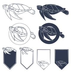 Sea turtle vector