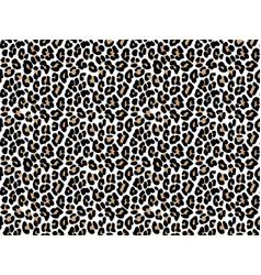 white leopard skin animal pattern vector image