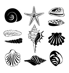 black monochrome of marine shells vector image