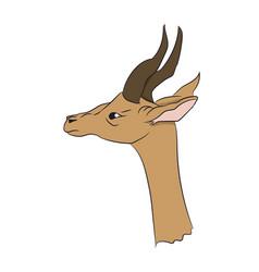 gazelle portrait vector image