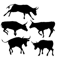 Collection of Bull Silhouette vector image vector image