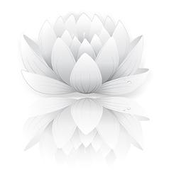 Grey lotus vector