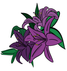 three purple lilies with green leaves on a white vector image