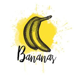 a banana hand drawn vector image