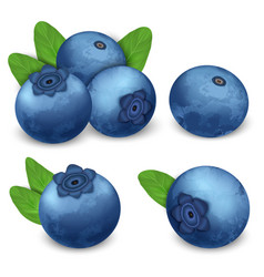 Bilberry icon set realistic style vector