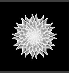 black and white flower on a black background vector image