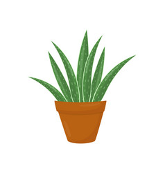 brown flowerpot with aloe vera green medical vector image