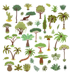 collection tropical trees palms and other vector image