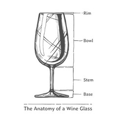 infographic of wine glass vector image