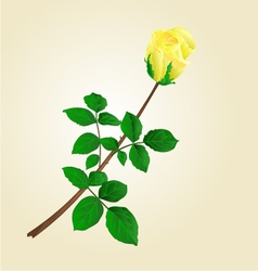 Yellow rose bud with leaves vector