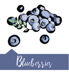 Blueberries in hand-drawn graphics vector
