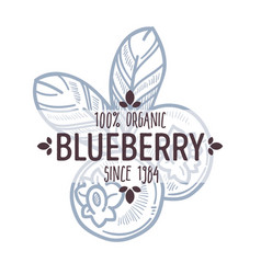 Blueberry or bilberry isolated icon with lettering vector