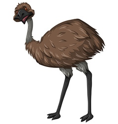 Emu bird with brown feather vector