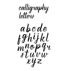 Modern hand drawn latin calligraphy brush script o vector