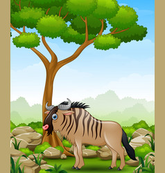 cartoon wildebeest mascot in the jungle vector image